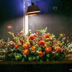 nights-gallery5